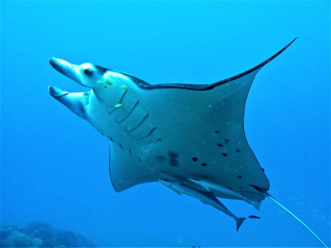 https://tahititourisme.be/wp-content/uploads/2017/08/Bora-Bora-Reef-Discovery-3.jpg