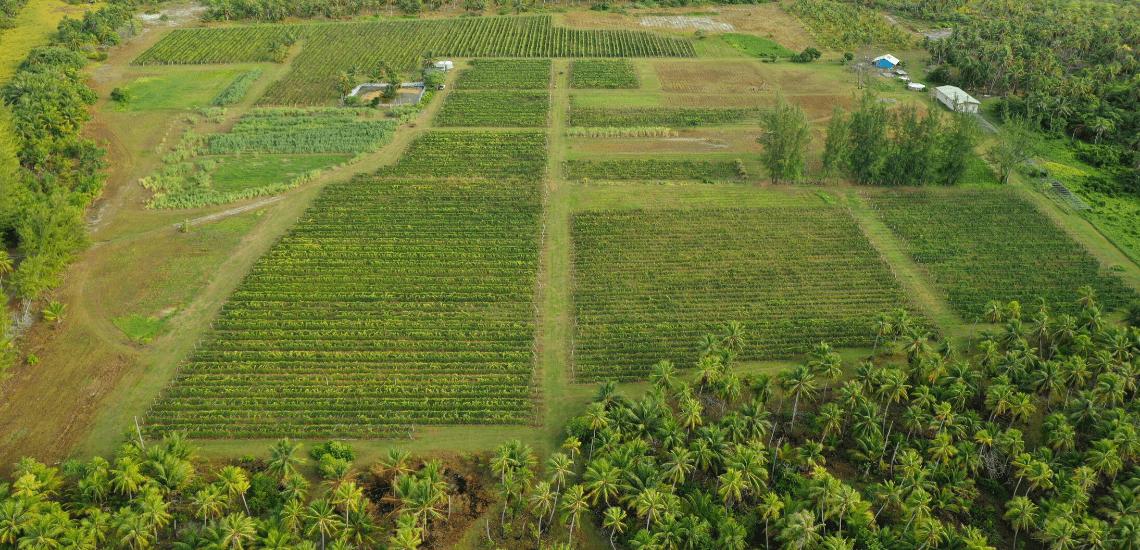 https://tahititourisme.be/wp-content/uploads/2017/08/Vin-de-Tahiti_1140x550-min.png