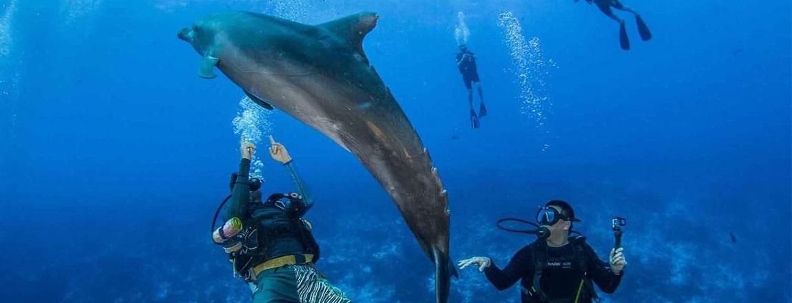 https://tahititourisme.be/wp-content/uploads/2017/10/Rangiroa-Diving-Center-1150x440px.jpg