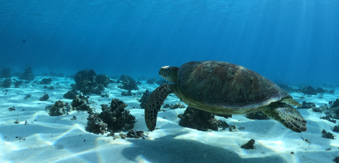 https://tahititourisme.be/wp-content/uploads/2019/05/captaintaina_1140x550-3.png
