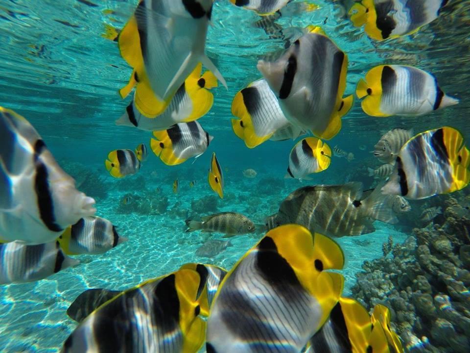 https://tahititourisme.be/wp-content/uploads/2020/06/jardin-corail-tahaa-5.jpg