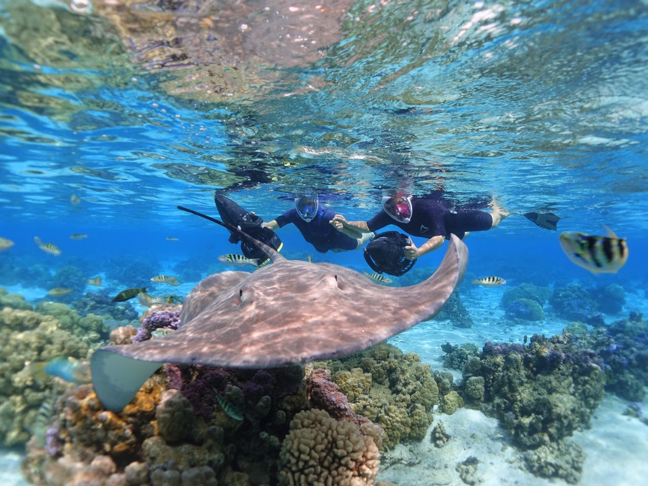 https://tahititourisme.be/wp-content/uploads/2020/09/Sea-Scooter-Snorkeling-Tour-à-moorea-copie-2.jpg