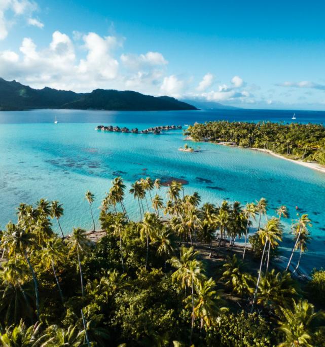 Plongée au coeur du Pacifique
