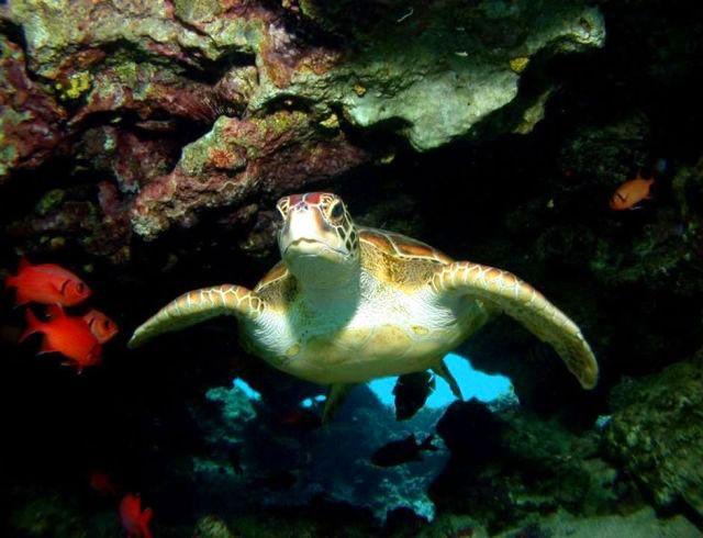 https://tahititourisme.be/wp-content/uploads/2021/05/Diving1.jpeg