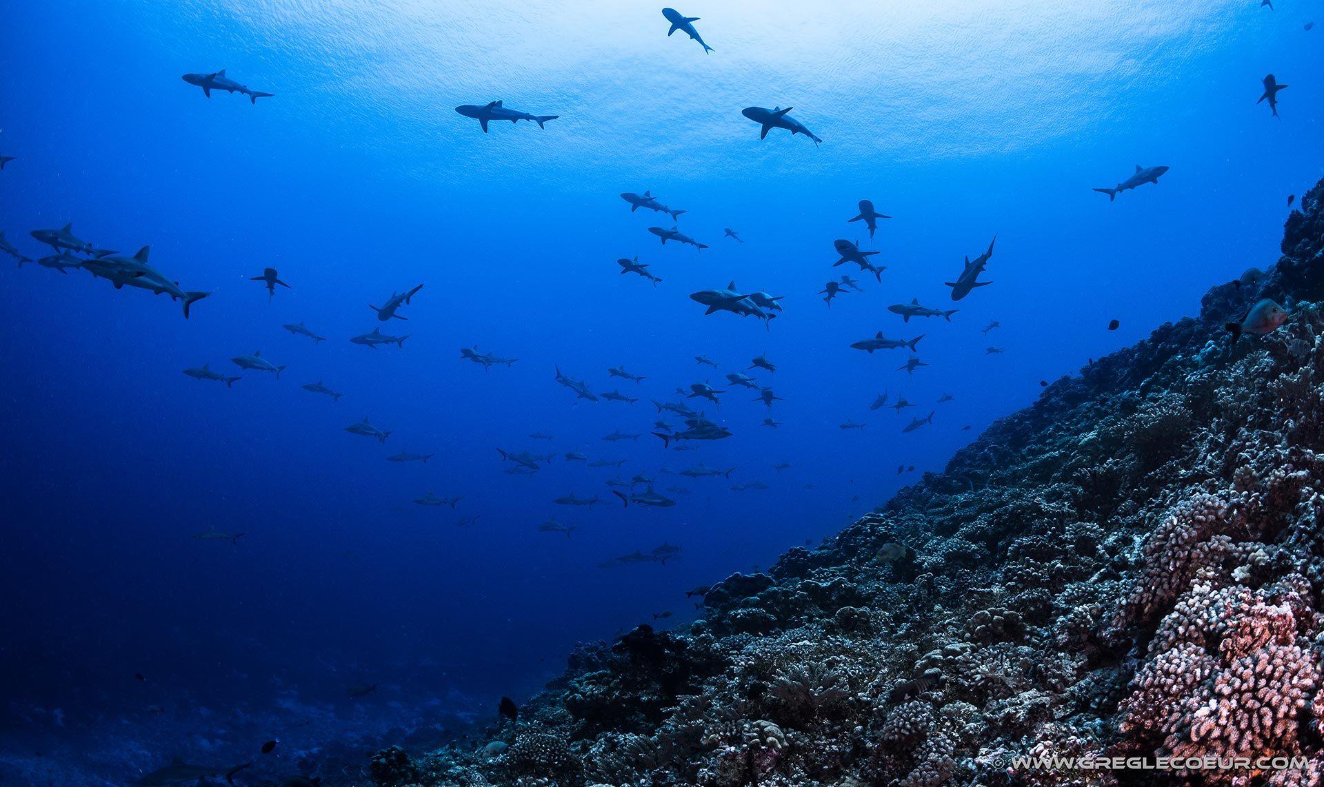 https://tahititourisme.be/wp-content/uploads/2021/05/diving2.jpeg